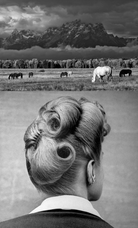 Horse Tails Top Photograph by Ansel Adams