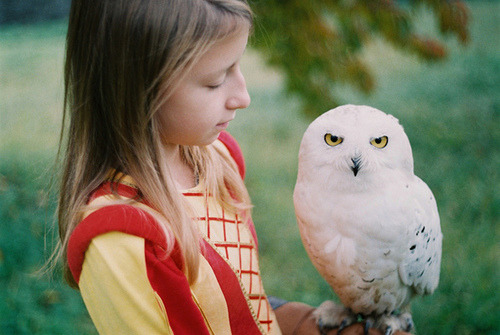 twelfthmoon:  white owl (by mitošinkovie)