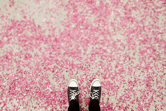 photojojo:  The Sea of Pink by Paul Octavious via tanagandhi