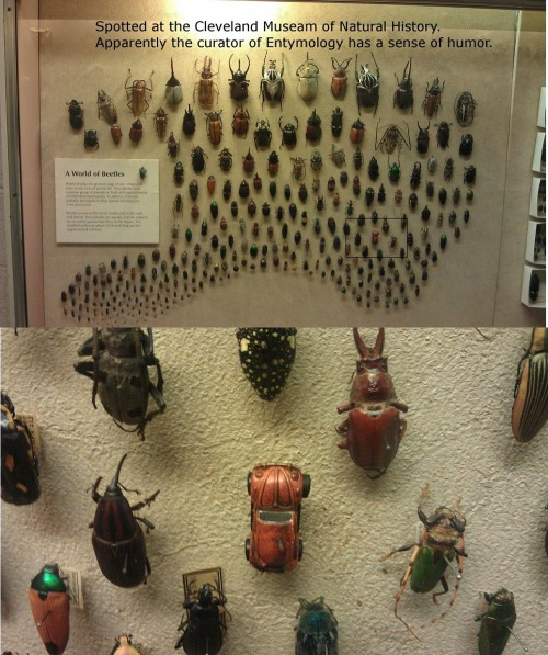 scienceisbeauty:  I absolutely love the humor sense of the entomologist from the Cleveland Museum of Natural History. Source