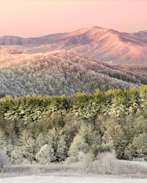 lady-pilot:  in-north-carolina:  Max Patch Mountain, via lightofthewild