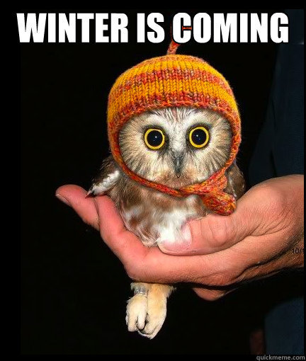 jesters-armed:  :P  Holy shit…it's a little owl, AND IT HAS A HAT. DYING.