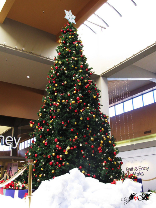 January 6th, 2011 The Christmas tree at Brazos Mall.