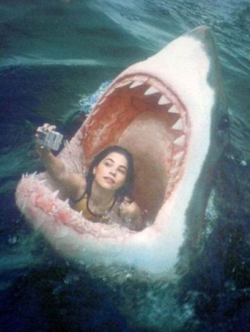 "Girl Takes Photo Of Herself In Shark's Mouth  ""Do it again, shark. You looked all mad and stuff in it."" - girl"