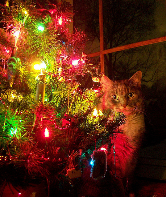 Christmas Kat by J-Fish on Flickr.