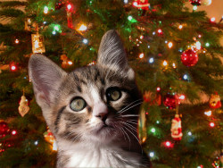 cybergata:  Sydneys First Christmas by Photogregs on Flickr.