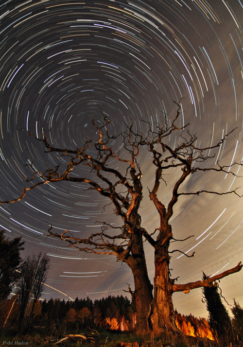 cwnl:  Time Goes By A long-exposure image has captured star trails around the north celestial pole above this old dead oak tree in Sweden. Find Polaris in the center of the trails. by P-M Heden