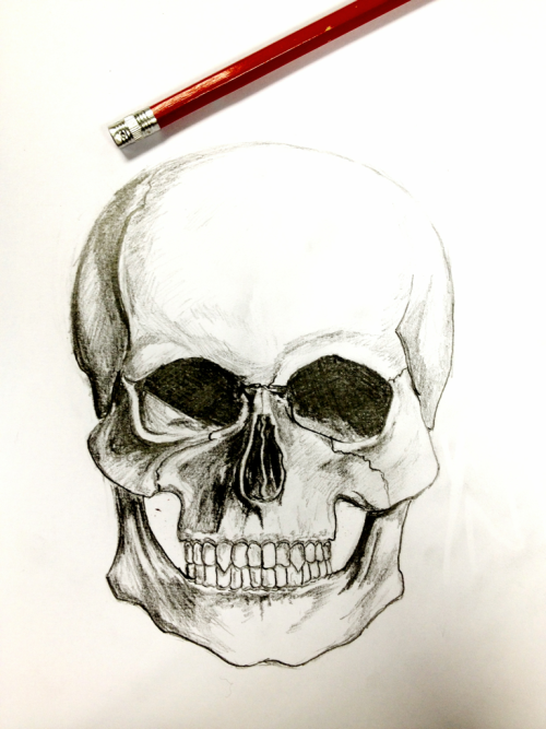Afternoon sketch. Getting bored? Draw a skull. Sure.