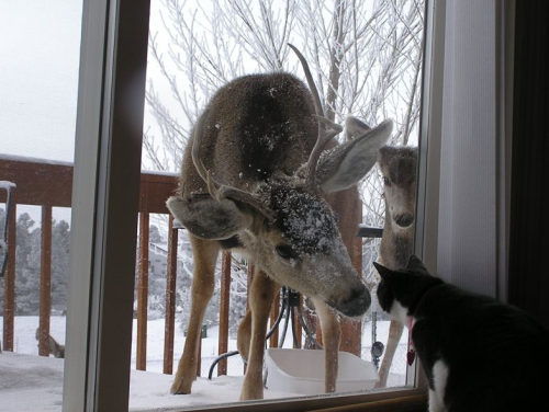 conflictingheart:  I want deer at my door