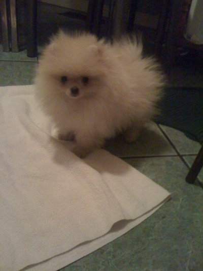 annieeong-deactivated20120214 submitted:  Meet Tofu!! :)  SO FLUFFY!