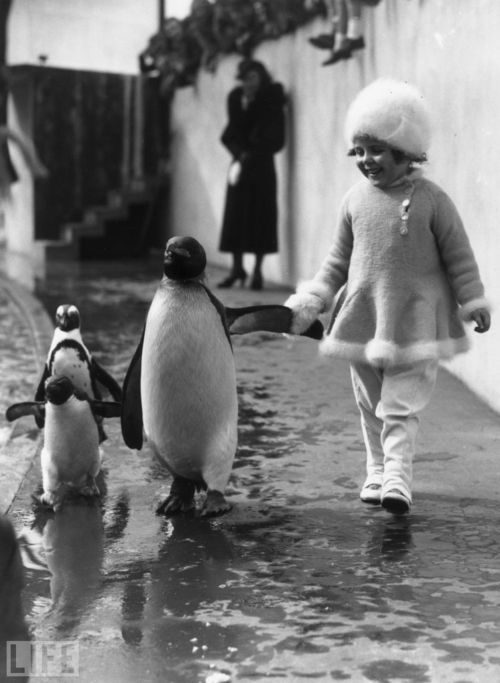 clubmonaco:   Penguins  The LIFE Magazine photography archives are endlessly inspiring. How fabulous is the little girl's fur trimmed frock? We're in love! -Matchbook Magazine