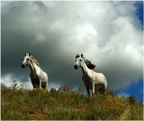 Horses on a ridge - A gorgeous image of colour, contrast and energy.