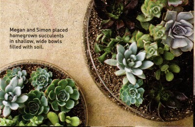 (via Stylized Design: 'Succulent' Succulents) Bah I want these! I have the most perfect piece of pottery to put 4 or 5 pretty succulents in, but it's quite hard to find succulents in December in Madison, WI, which I guess shouldn't be surprising. Have to keep looking!
