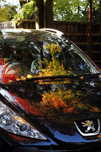 Autumn has fallen on a car by kamomebird (Busy in Ise, Mie prefecture) on Flickr.