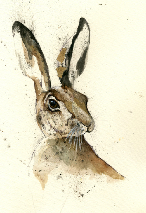 gordywright:  Hare 5