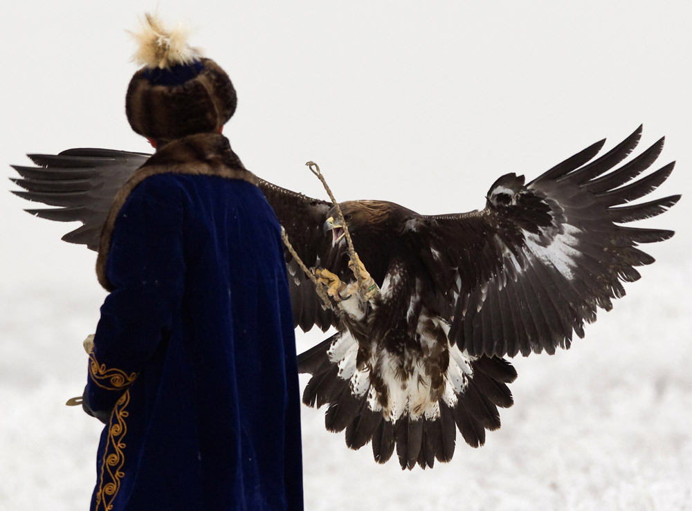 Photos of the dayA tame golden eagle approaches a hunter during an annual hunting competition outside Almaty December 9, 2011. (Shamil Zhumatov/Reuters)