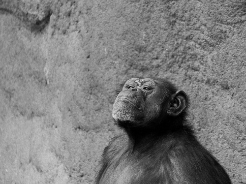 smug monkey on Flickr.