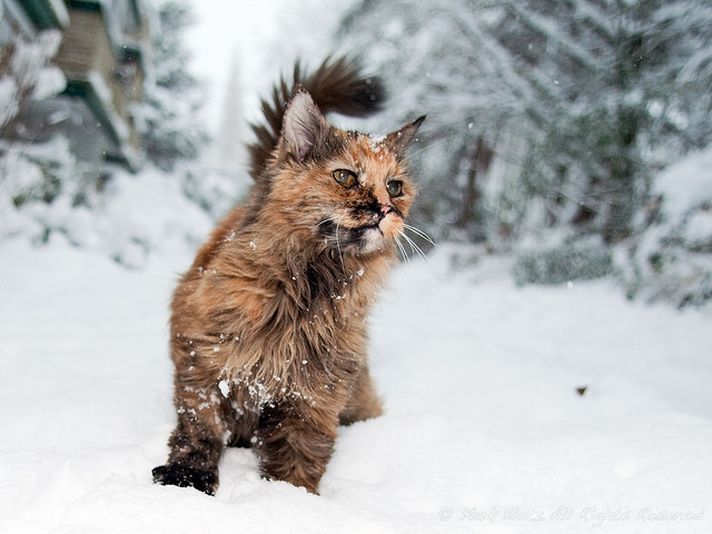 Kitty in the Snow by Mark Klotz on Flickr.