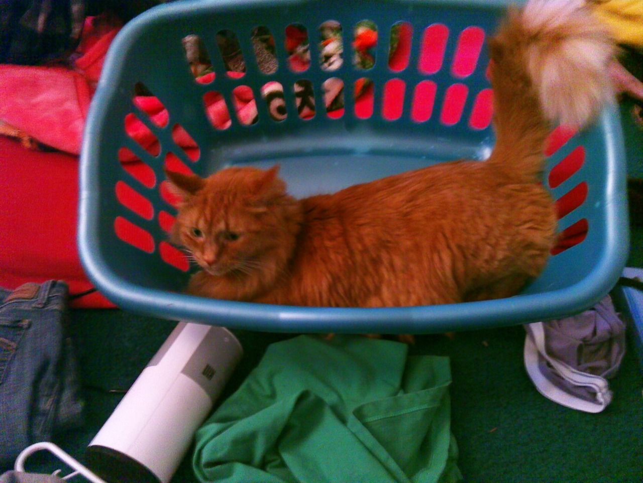 Nemo doesn't help do the laundry.