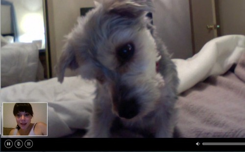 This is how I spent last Friday night. Skyping with my puppy! Actually, to be fair, I also went to Michael's Crafts, TJ Maxx, HomeGoods & Whole Foods. I bought an insane amount of Christmas decorations, crafting supplies and things adorned with snowmen. In the past, I would have felt really lame about this. I would have disregarded the fact that I had gone out every other night that week and had plans already set for the next night. I would have just felt very wah-wah and convinced myself I had no friends and no life. But now I say Live what you Love, sister! And, well, I love crafting, being festive and all holiday like, popping in a favorite DVD and twirling/sliding/dancing around my apartment. It fills me up with joy, delight & is really nice after being out lots of nights in a row. Find what makes you happy & then do it! It's your life, friends. Design it!