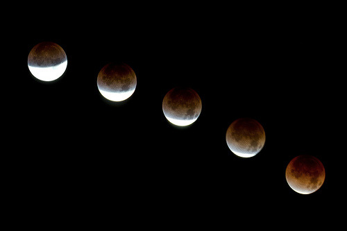 uraniaproject:  Lunar Eclipse December 10, 2011 (Seattle) (by hinzo)