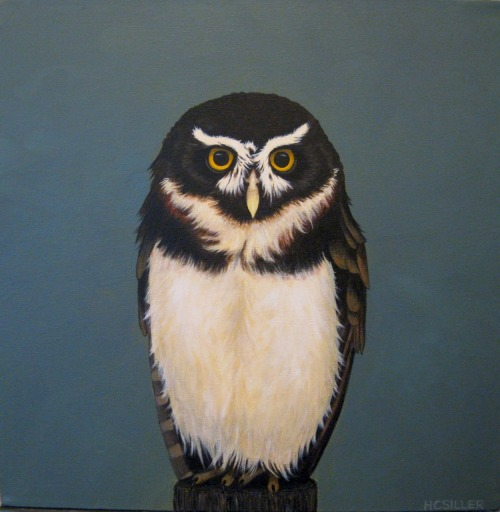 """Spectacled Owl"" 16"" x 16"" Acrylic on canvas SOLD"
