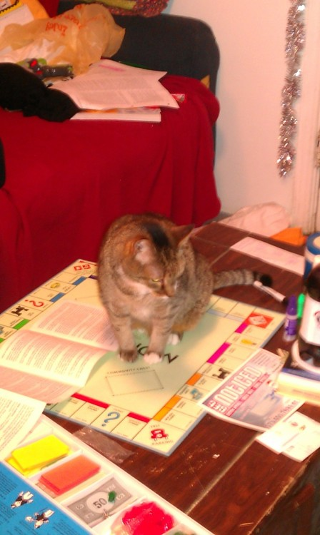get off of there cat. you are not a part of the monopoly game nor are you the free parking money. we cannot play monopoly until you move.