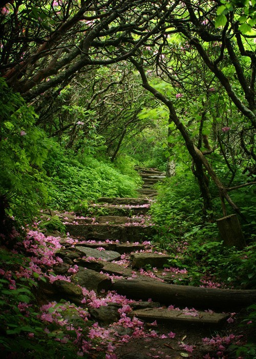 andyouwhisperyouloveme:  Craggy Gardens, Blue Ridge Parkway, North Carolina (Google)