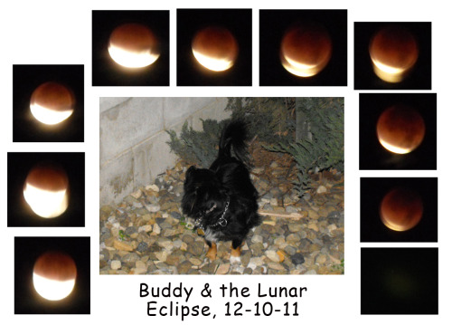 Buddy, the family and the lunar eclipse, memories - priceless!