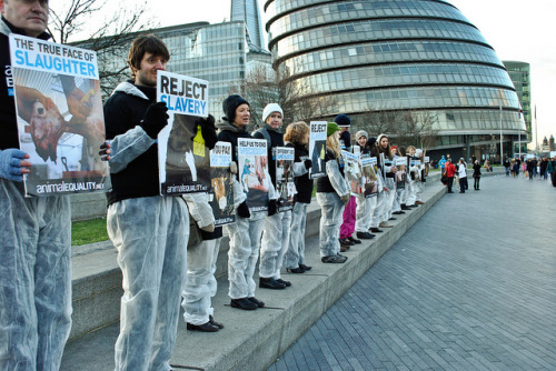 vegangirls:  10/12/2011 - London - International Animal Rights Day by Igualdad Animal | Animal Equality on Flickr.