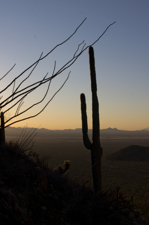 Saguaro National Park, Hugh Norris Trail.