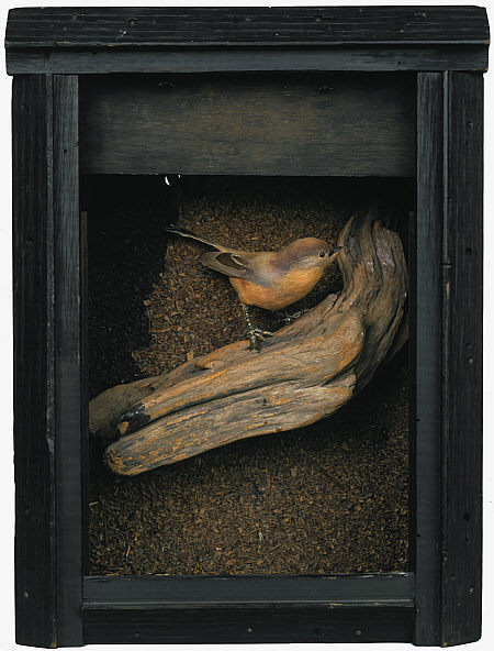 cavetocanvas:  Joseph Cornell, Untitled (Bird Box), c. 1948 From the National Galleries of Scotland:  Cornell was a keen amateur naturalist and bird-watcher. He began using engravings and cut-out pictures of birds, as well as stuffed birds, from 1942. For Cornell, birds were a symbol of heaven and freedom, their flight path linking heaven and earth. The artist made a number of 'habitats', such as this work, in the 1940s and 1950s, using natural materials collected on walks in the woods and fields of Long Island. The box recalls the man-made environments in museums, designed to recreate slices of nature and used for educational purposes.