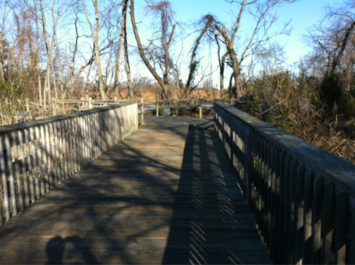 Refreshing 6-mile run today on the Kent Island Maryland Cross Island trail