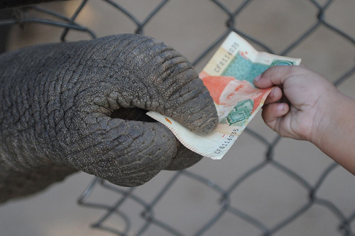 newsflick:  Islamabad, Pakistan: An elephant collects a 20 rupee bank note from a young boy at a zoo. (AFP)