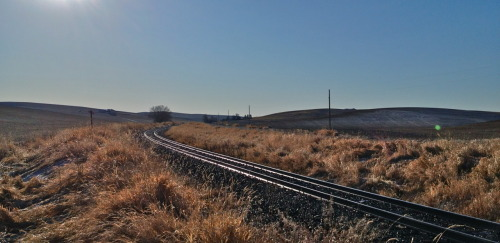 The old Palouse & Lewiston in the canary grass by the E. Whittier Road crossing, Spokane County, Washington.