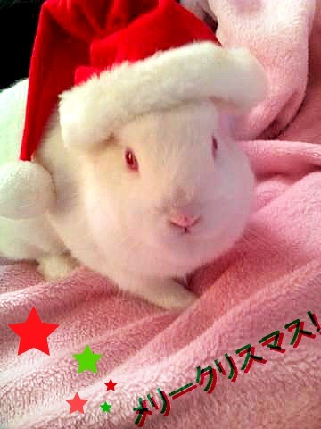 charmy-moon:  It's almost Christmas so I put a Santa hat on Momiji ~ Isn't she cute?!  (づ。◕‿‿◕。)づ