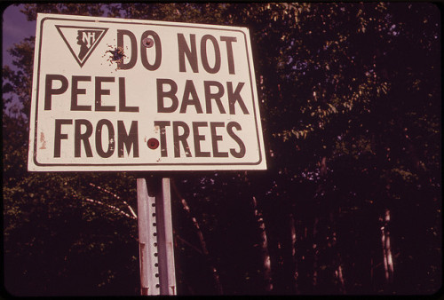 Well d'uh! Too bad people have to be told not to destroy the birches.  Original caption: Sign at the Shelburne Birches area on the Androscoggin River, [New Hampshire], June 1973. Photograph by Charles Steinhacker
