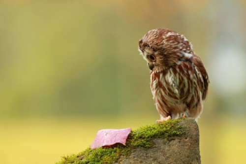 [image description: An owl is perched on a mossy rock, looking down at a red leaf.]   SOMETIMES LIFE GIVES YOU STUFF AND YOU LOOK AT IT LIKE WHAT THE FUCK IS THIS SHIT?! BUT YOU KNOW WHAT? SOMETIMES IT'S JUST A LEAF. SO YOU GOTTA CHILL OUT EXAMINE ALL THE EVIDENCE AND TACKLE WHATEVER LIFE THROWS AT YOU WITH A CALM HEAD.