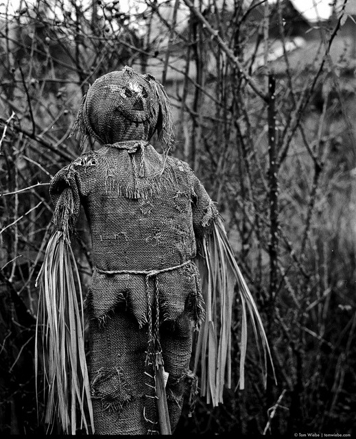 Urban Scarecrow on Flickr.Via Flickr: This scarecrow on Mole Hill, right at the heart of the downtown penninsula, struck me as rather a incongruous thing to find in downtown Vancouver but, then I heard that they caught a bear at the Queen Elizabeth Theatre this afternoon…
