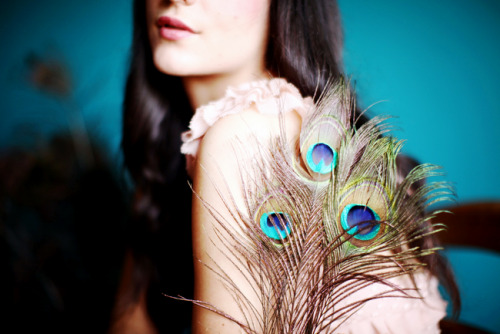 Peacock feathers from CB girl.