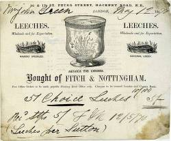 "schlieffen:  ""May 1870 reciept for purchase of medical leeches"" (The History of Medical Leeches)  Robbie and I almost went in halfsies on a medical leech, but didn't know where we'd get raw meat to feed it in Beloit.  Owning one or more is on my personal bucket list."