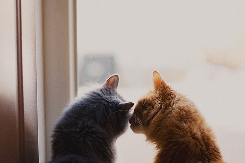 daily-tumbles:  Whispering sweet nothings (by sopheava) Following this blog will be the best thing you ever do