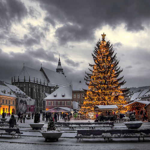 necydalis:  HDR - Winter Christmas Tree by 23gxg on Flickr.