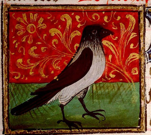 bblacha:  Crow. detail. French 1447 Enlum. by tony harrison on Flickr.