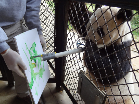 discoverynews:  Animals Make Art
