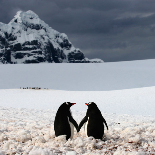 "From The Telegraph: ""A penguin couple appear to be holding hands. The moment was captured  on camera by professional photographer Silviu Ghetie in Port Lockroy - a  natural harbour in the Antarctic Peninsula."""