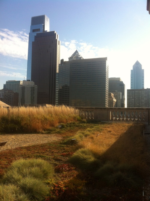 Submitted by Eric Dalski:  The Free Library of Philadelphia's Green-Roof.  The grasses in the wind looks pretty awesome.  Thanks for the submission!