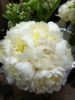 Oh! does this mean the white peonies are in the NYC flower market? I think I just found my winter solstice party flowers! inbloomnewyork:  A lush bouquet of white peonies is romantic and traditional, but always a favorite.