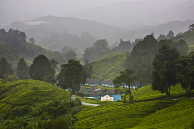 "375 DAYS - 365 PHOTOS - Photo 169, taken October 2, 2009, Cameron Highlands, Malaysia. From Peninsula Malaysia, a conversation on Quora about fairytale looking landscapes got me thinking this morning about what makes a landscape look surreal — or like, out of a story book. I believe the answer has just as much to do with light and natural weather elements than the actual physical landscape. In this case above, a misty morning shot with dull light on the undulating highland hills of Malaysia gives this place a storybook feel. There's a lot of cool photos and responses on Quora to the question: ""Which real places or buildings look as if they could have been taken out of fairytales?""  Check them out — and some of my answers here. 375 DAYS - 365 PHOTOS is a series of photographs from the archives of jonahkessel.com. Photographs span over eight years and include locations from all around the world. They fall in no particular order, but their own.  For an explanation of why there are 375 days in this photo series instead of the traditional 365 days, see this link. To make bets on how many days will actually pass by the time it takes Jonah to post 365 pictures, see this link."