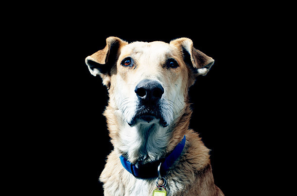 rebeldog:  TIME MAGAZINE: Person of The Year 2011: The Protester / Meet Loukanikos http://www.time.com/time/person-of-the-year/2011/?iid=redirect-poy